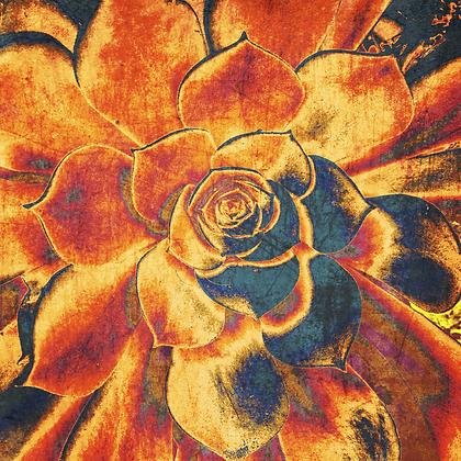 Echeveria Elegans, Hand  Embellished Canvas Giclee