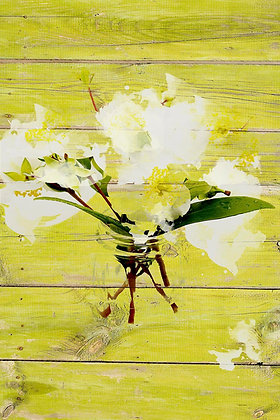 White Flowers in V, Hand Embellished Canvas Giclee