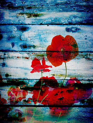 Floral Art, Red Poppies
