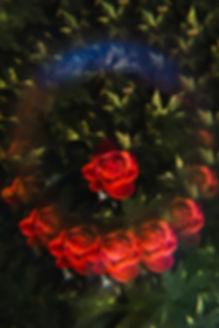 Fabian's_Rose_-_Anna_K._Greus_V3-2.jpg