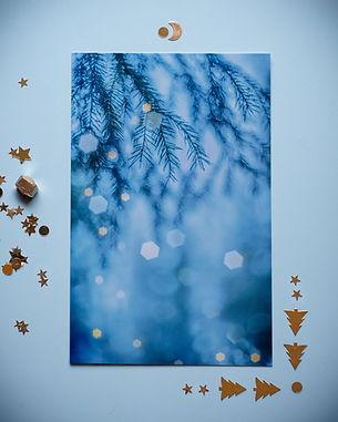 postikortit_suojelus_nurturing_tree-5-in