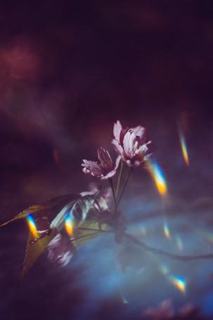 7. Lähde (Spring)