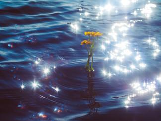 Sun's diamonds and Marsh Marigold
