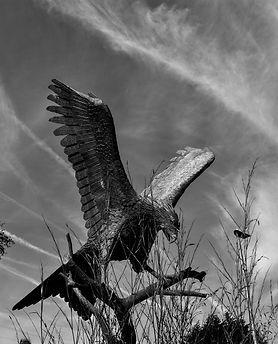 Llanwrytdd Wells Bird B-W.jpg