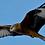 Thumbnail: Gigrin Farm Red Kite Centre