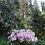 Thumbnail: Welsh Historic Gardens Trust