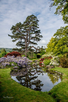 Glanusk Gardens and Oak Collection