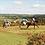 Thumbnail: Ellesmere Riding Centre