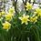 Thumbnail: Brecknock WildlifeTrust
