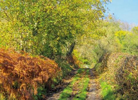 Montgomery Trails: Abermule and Bettws Cedewain