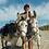 Thumbnail: Mulod Dyfi Donkeys