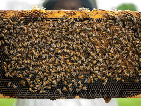Why Bees Matter so Much to Humans 🐝