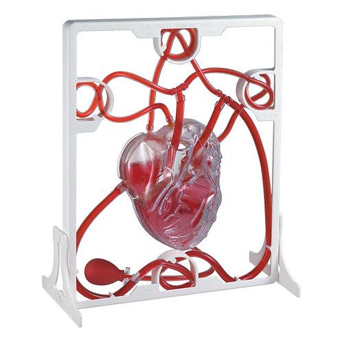 EDU-TOYS Pumping Heart