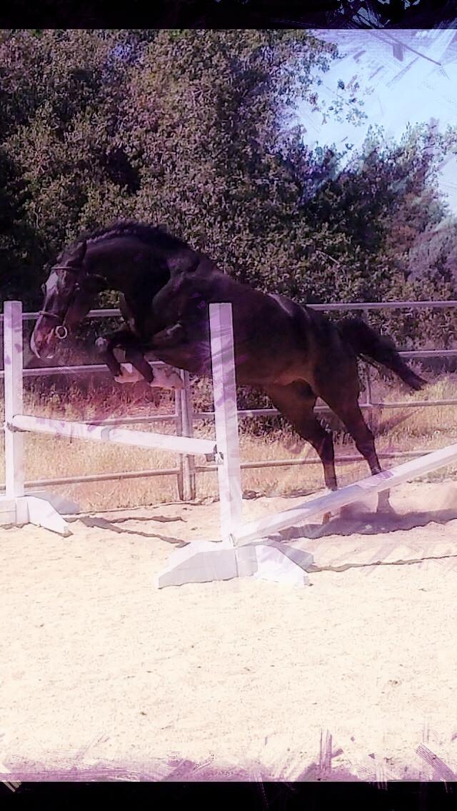 bo jump.jpg