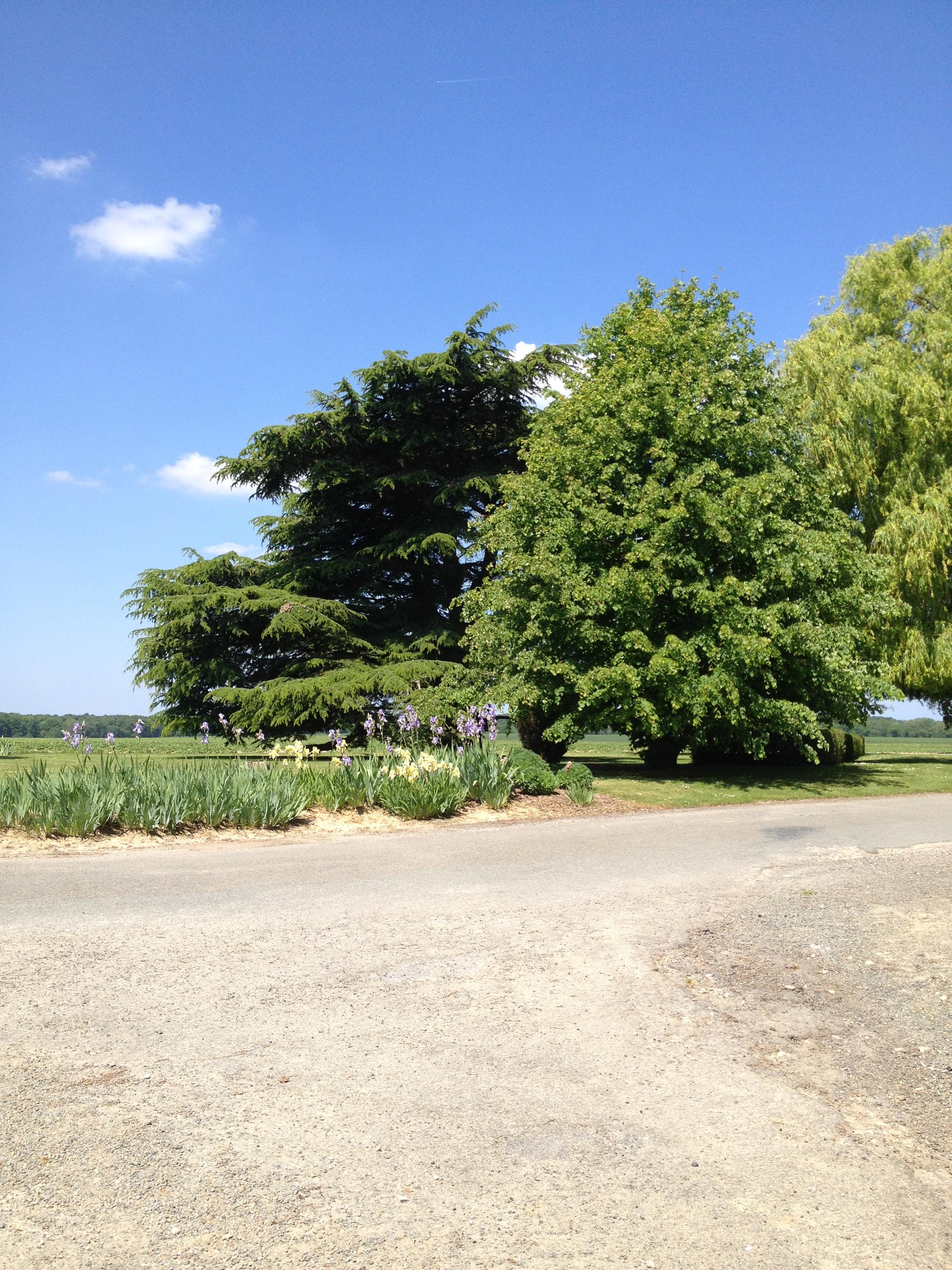 Le-jardin1.JPG