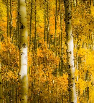 aspen grove (5 of 5).jpg