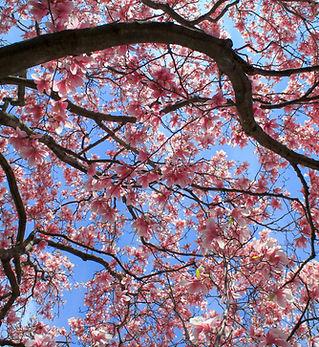 Cherry 2.jpg