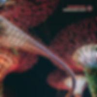 PANZERPAPPA-SummariskSuite.jpg