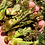 Thumbnail: Foraged Feast Wild and Special Spring Share prorated