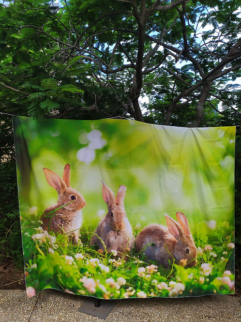 Rabbits backdrop
