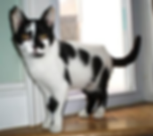 LillyBristol_SpecialCats-300x266.png