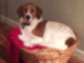 Grissom_special_dog_2015-300x224.png