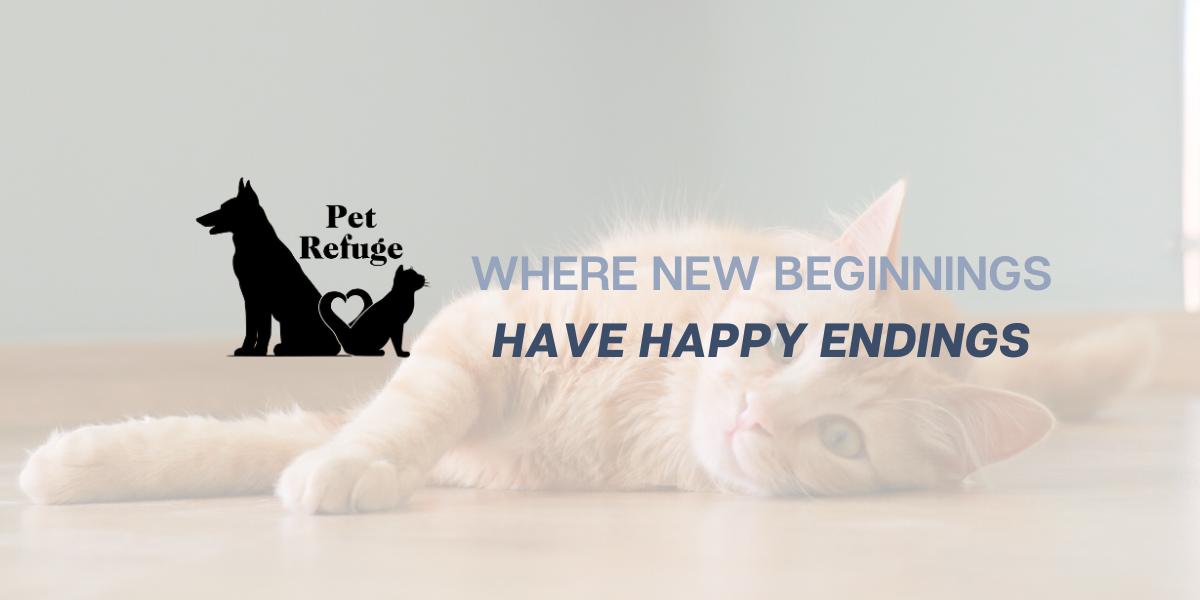 Cats Pet Refuge