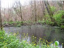 Beaver Pond 4.JPG