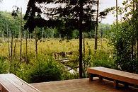 Hawk's Pond.JPG