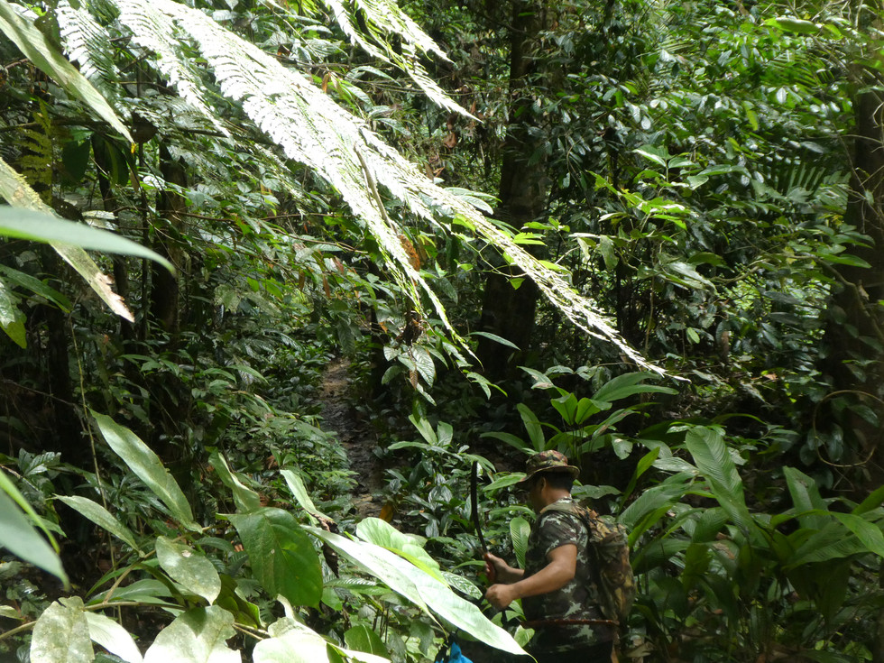 Meandering through Malaysia