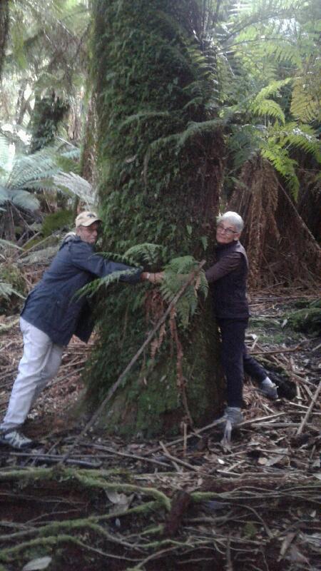 Make sure to hug a BIG tree