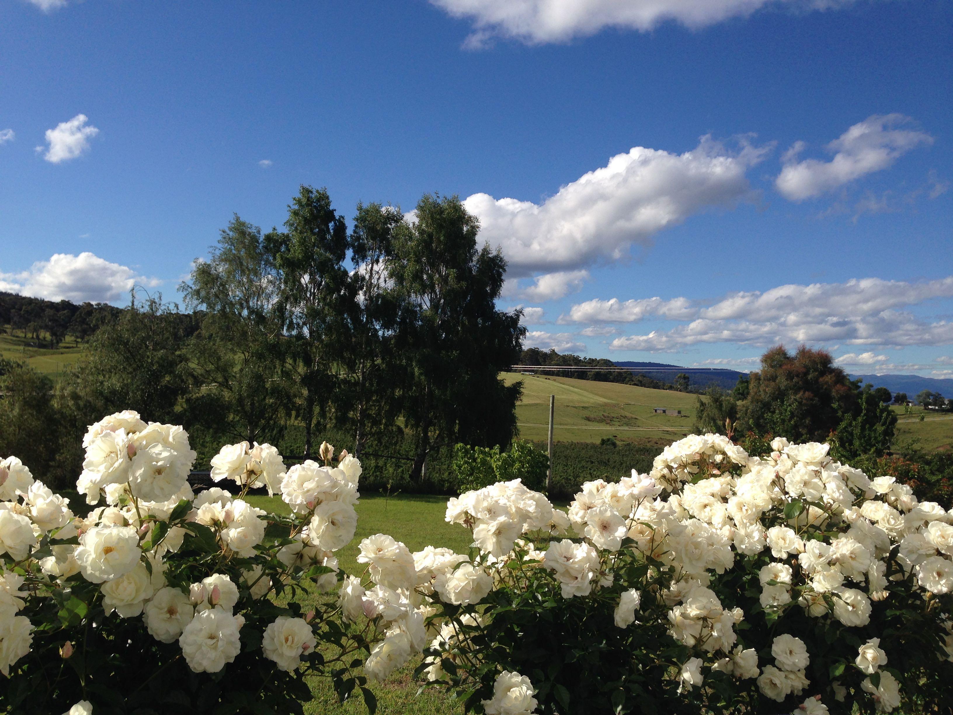 Rose lovers' heaven