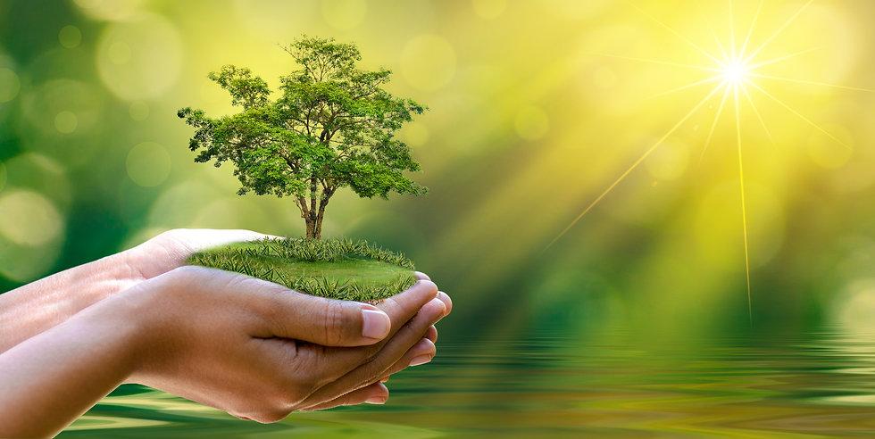 人の手と植物