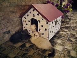 Gossip cats dedikoducu kediler :))