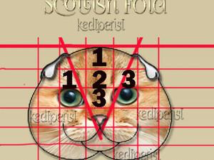 British Shorthair & Scottish Straight & Fold kediler arasındaki  farklılıklar