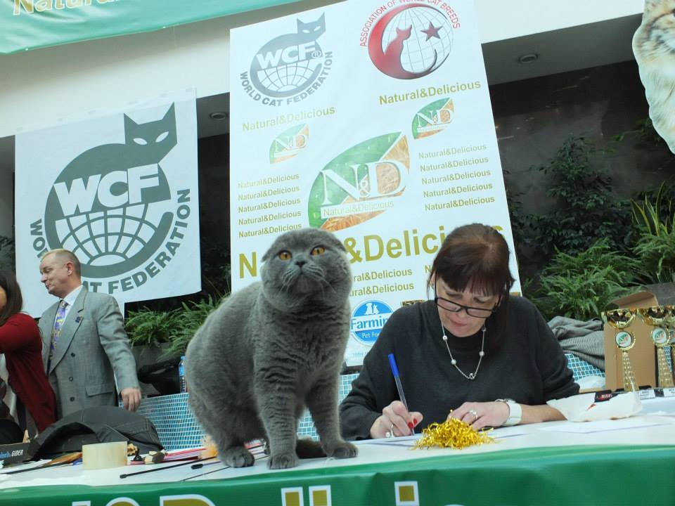 wcf-cats-show-in-istanbul.jpg
