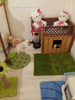 Kedi bebek odası