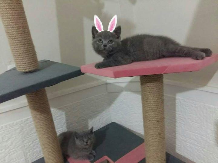 Kedi Perisi malikanesinde tembelgiller 😏