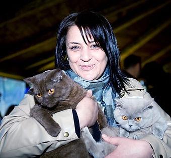British shorthair sahibinden satılık safkan kedi yavruları