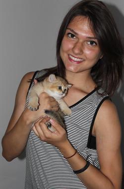 British shorthair kediler