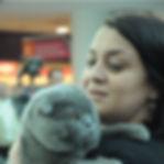 Scottish Fold kedi BARON Türkiye'nin en güzel iskoç kedisi hakkında secere ve tüm bilgiler için lütfen tıklayınız