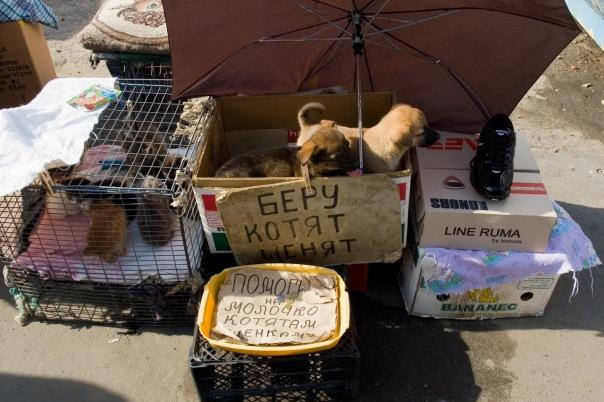 Hayvan Pazarları Kharkov UKRAYNA