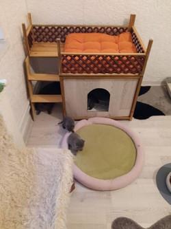 Kedi Perisi Evi Cattery Nursery Room