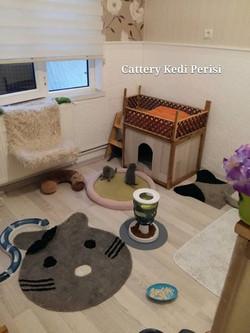 Kedi Perisi örnek yavru odası