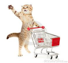 Kediniz Evinize Gelmeden Önce almanız gerekenler
