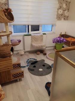 KEDİ PERİSİ bebek odası