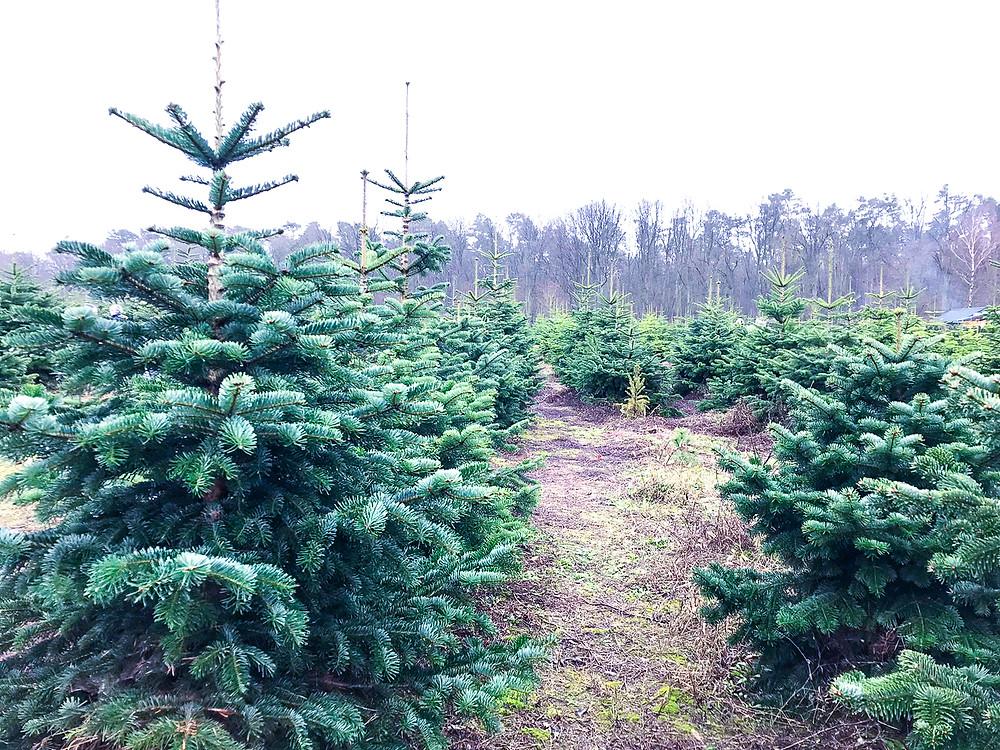 Coffee Talk Weihnachtslektionen #weihnachten #lektionen #selfcare #selflove #selfconfidence #selbstbewusstsein #manieren #gesund #glücklich #feiertage #christmas #lektionen #leben #coffeetalk