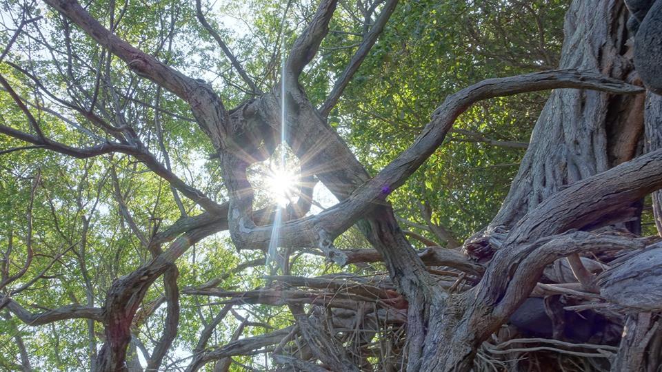 Relax. Heal. Dream. Rebirth. Enjoy.