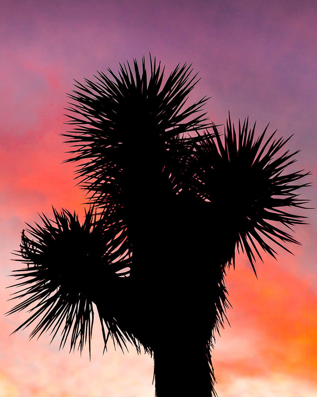Joshua Tree Fire