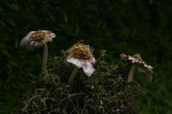 Flores con Cabezas de Ajo